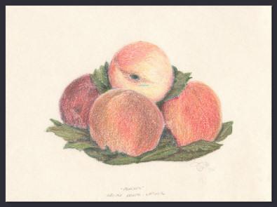 Study-Peaches