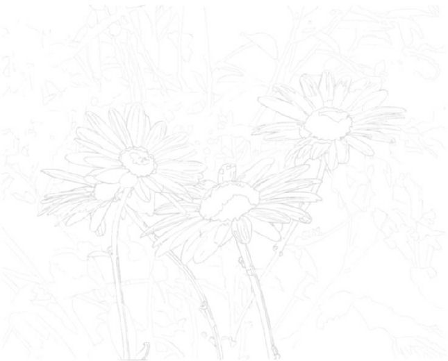 Daisies - old composition